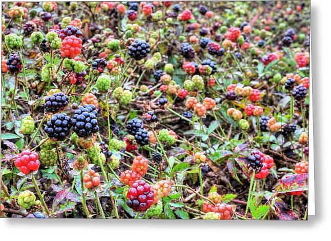 Black Berries Photographs Greeting Cards - Miles of Blackberries Greeting Card by JC Findley