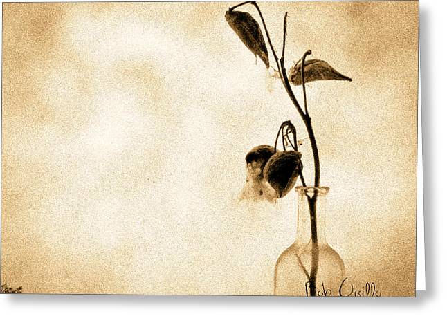 Flower Still Life Greeting Cards - Milk Weed In A Bottle Greeting Card by Bob Orsillo