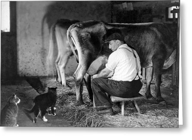 Cowshed Greeting Cards - Milking Time On The Farm Greeting Card by Underwood Archives