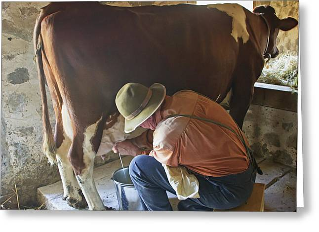 Manual Greeting Cards - Milking Time Greeting Card by Wayne Stabnaw