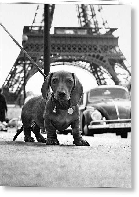 Eiffel Tower Greeting Cards - Milo mon Chien Greeting Card by Hans Mauli