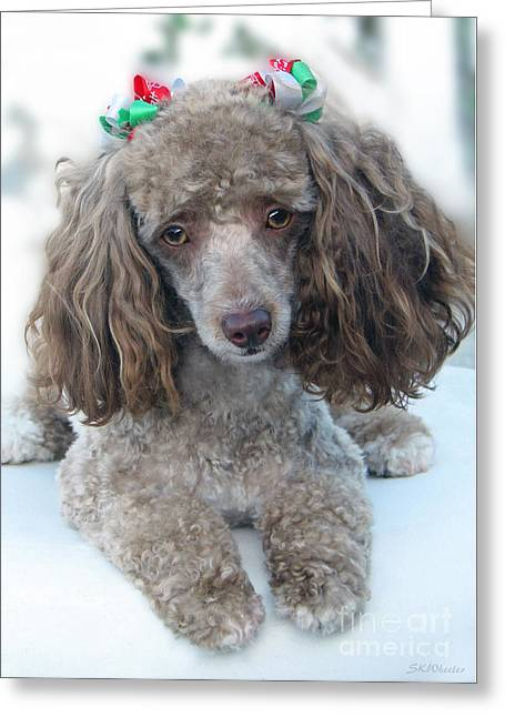 Toy Dog Greeting Cards - Mimzy Doesnt Like The Groomers Greeting Card by Sabrina Wheeler