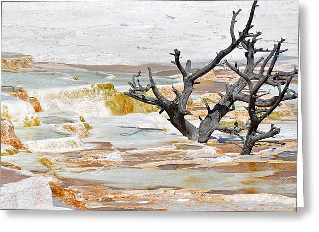 Mammoth Terrace Greeting Cards - Mineralized Tree Greeting Card by Bruce Gourley