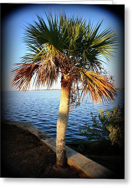 Small Trees Greeting Cards - Mini Palm Greeting Card by Mandy Shupp