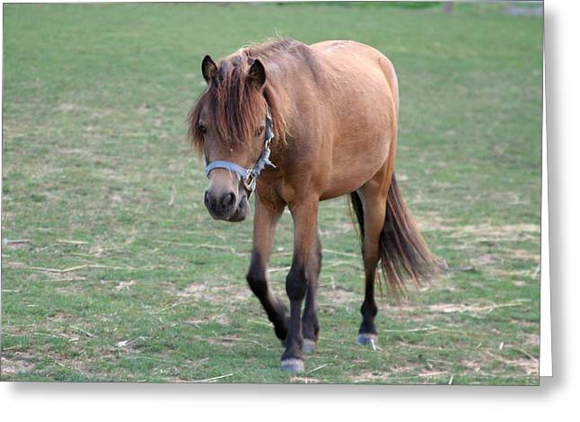 Shushing Greeting Cards - Miniature Horse Greeting Card by Rachel Roushey