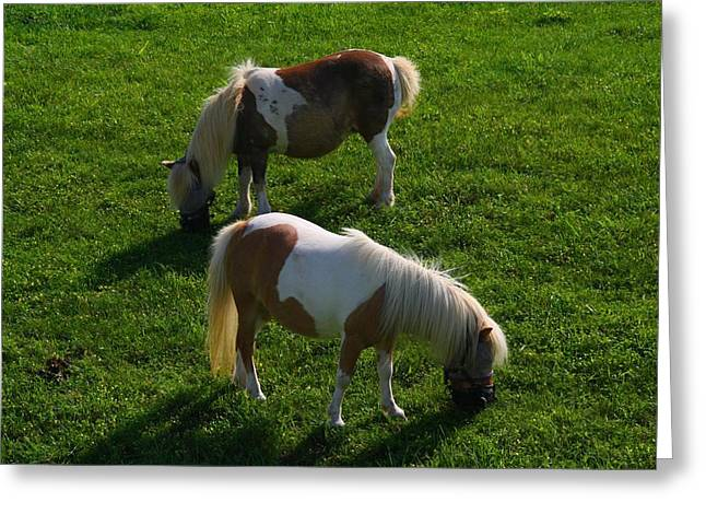 Kentucky Horse Park Photographs Greeting Cards - Miniature Horses Greeting Card by Kathryn Meyer