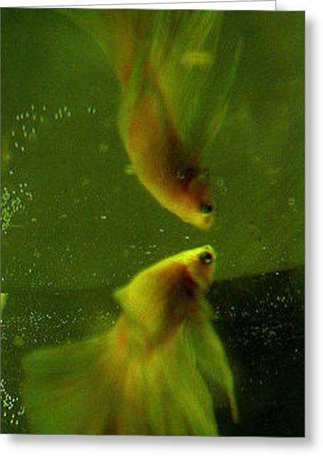 Betta Greeting Cards - Mirror Image Greeting Card by CL Redding