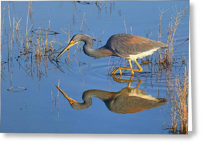Mirror, Mirror  Greeting Card by John Absher