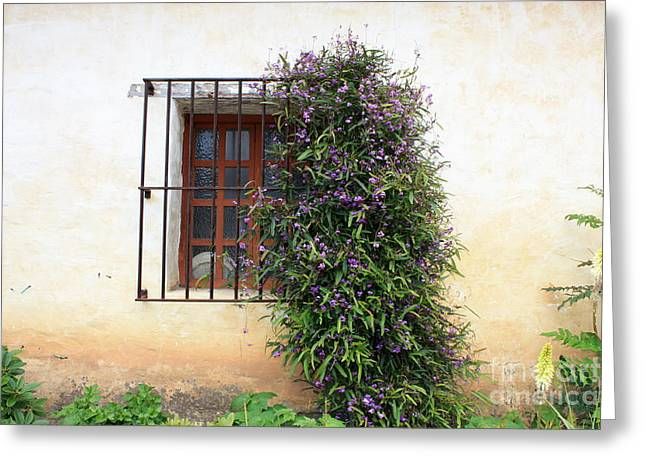 Mission Window With Purple Flowers Greeting Card by Carol Groenen
