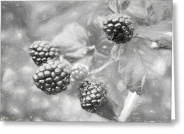 Mississippi Blackberries In Black And White Greeting Card by JC Findley