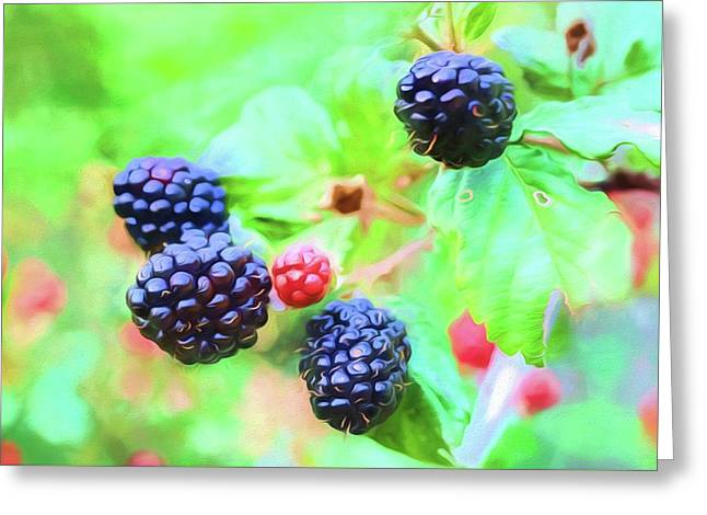 Mississippi Blackberries Greeting Card by JC Findley