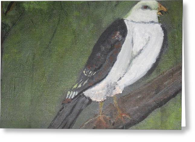 Kite Greeting Cards - Mississippi Kite Greeting Card by Robert Reily