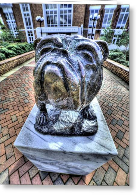 Mississippi State Bulldog Greeting Card by JC Findley