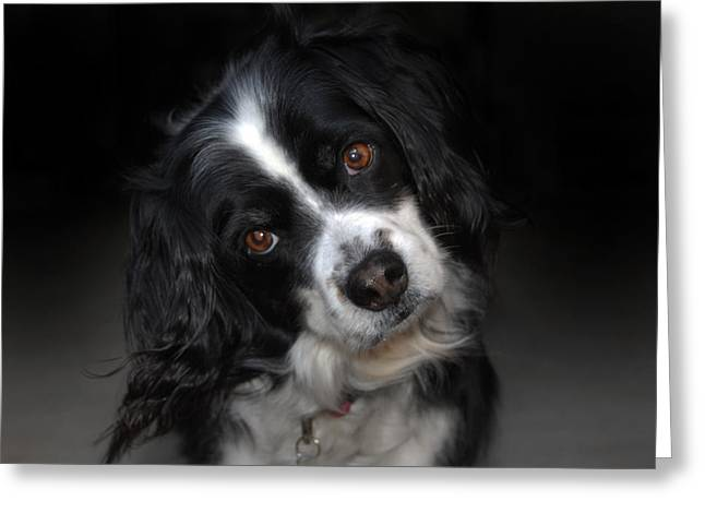 Dog Photo Greeting Cards - Missy Greeting Card by Skip Willits