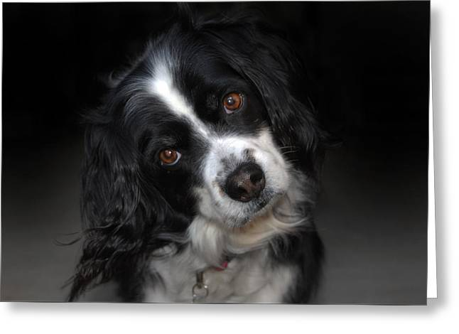 Spaniel Greeting Cards - Missy Greeting Card by Skip Willits