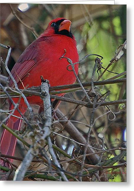 Mustaches Digital Greeting Cards - Mister Cardinal Greeting Card by DigiArt Diaries by Vicky B Fuller