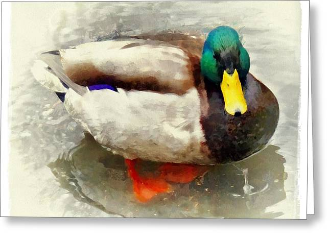 Hunting Cabin Digital Art Greeting Cards - Mister Duck Greeting Card by Patricia Strand