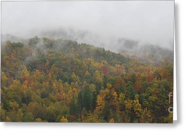 Wv Greeting Cards - Misty Autumn Greeting Card by Randy Bodkins
