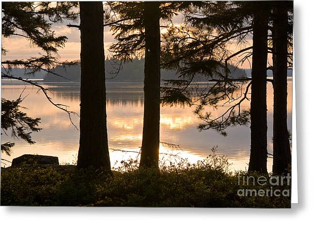 New England Wilderness Greeting Cards - Misty Bay Greeting Card by Susan Cole Kelly