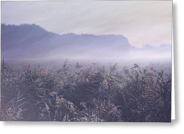 Lanscape Greeting Cards - Misty Fields Greeting Card by Jenny Rainbow
