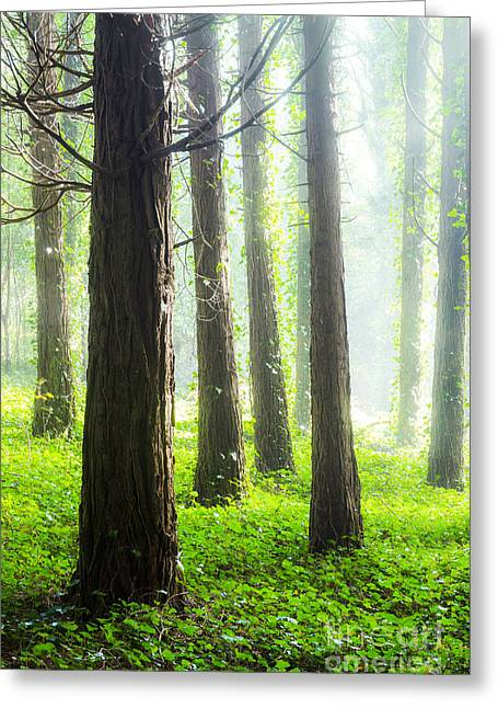Misty Forest Greeting Card by Carlos Caetano