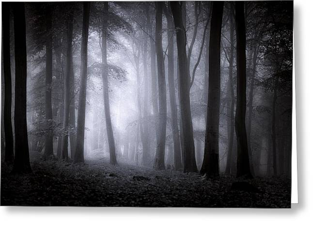 Kent Falls Greeting Cards - Misty Forest Greeting Card by Ian Hufton