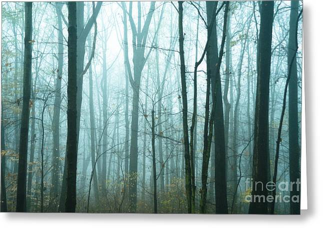 Gloomy Winter Greeting Cards - Misty Forest Greeting Card by John Greim