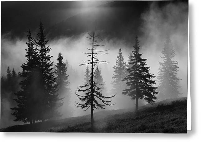 Romania Photographs Greeting Cards - Misty Forest Greeting Card by Julien Oncete