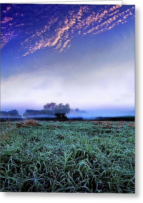 Misty Frost Greeting Card by Phil Koch