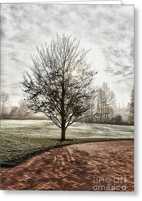 Misty, Frosty Morning Sun Greeting Card by Lois Bryan