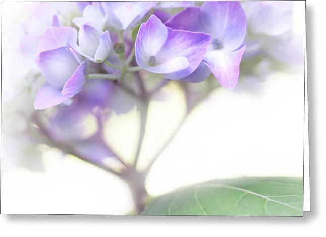 Misty Hydrangea Flower Greeting Card by Jennie Marie Schell