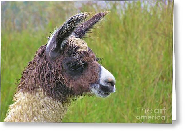 Eyelash Greeting Cards - Misty Llama Greeting Card by Michele Penner