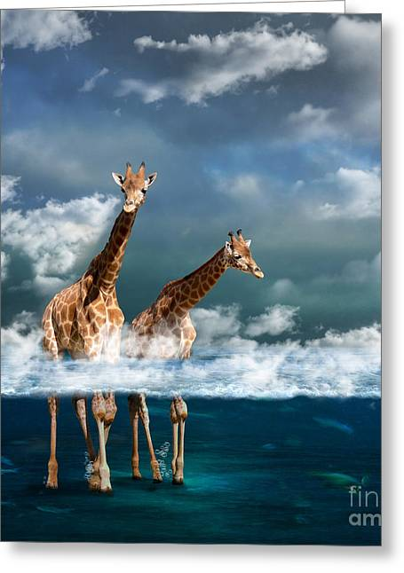 Sea Animals Greeting Cards - Misty Greeting Card by Martine Roch