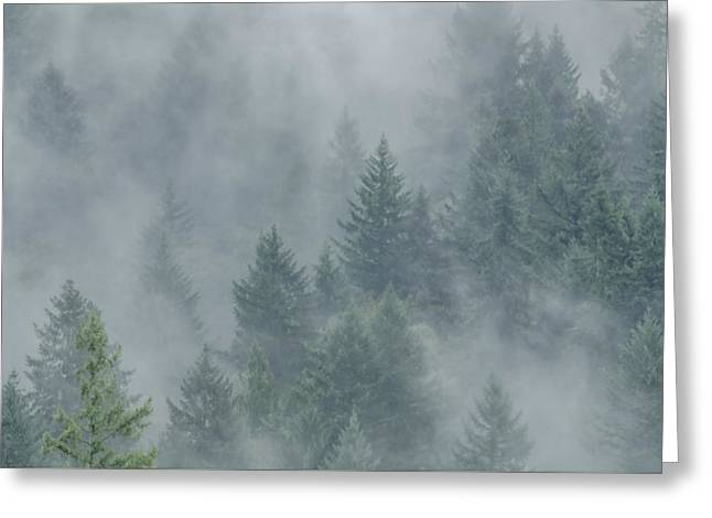 Raining Greeting Cards - Misty Mood Greeting Card by Don Schwartz