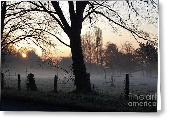 Misty Morning Greeting Card by Mark Hughes