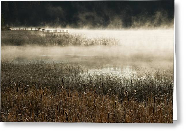 Water Lilly Greeting Cards - Misty Morning Greeting Card by Peter Olsen