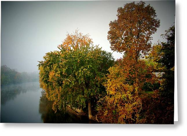 Indiana Autumn Greeting Cards - Misty Morning Shoreline Trees Greeting Card by Rory Cubel
