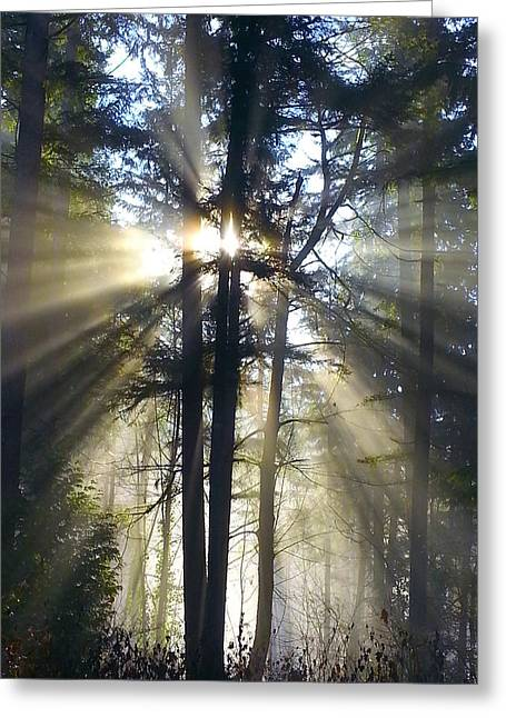 Mossy Trees Greeting Cards - Misty Morning Sunrise Colorful Greeting Card by Crista Forest