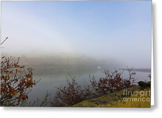Misty Mylor Greeting Card by Terri Waters