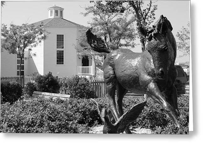 Misty of Chincoteague Greeting Card by Gregory Smith