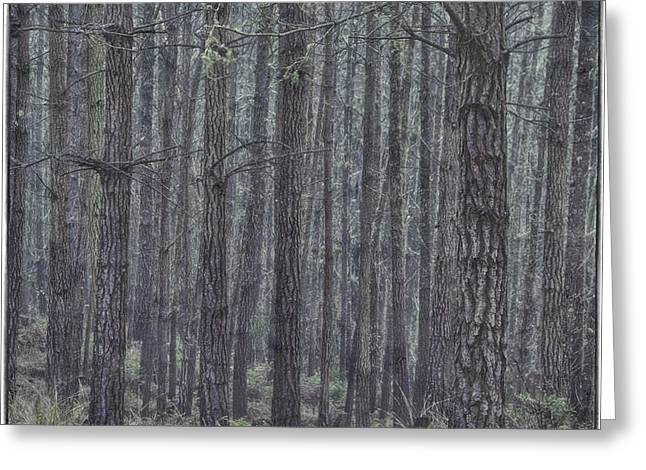 Mystic Art Greeting Cards - Misty Pines Greeting Card by Mitch Shindelbower
