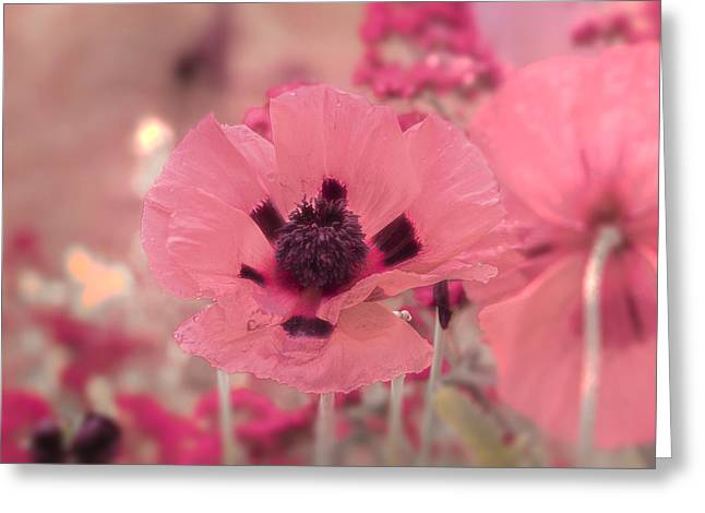 Misty Pink Greeting Card by Scott Carruthers