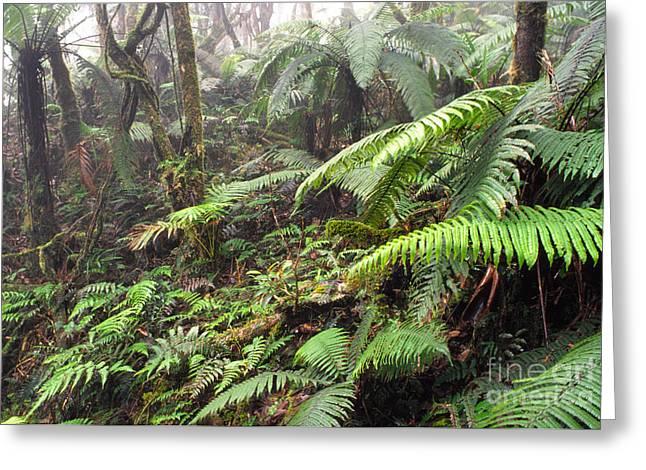 Misty Rainforest El Yunque Greeting Card by Thomas R Fletcher