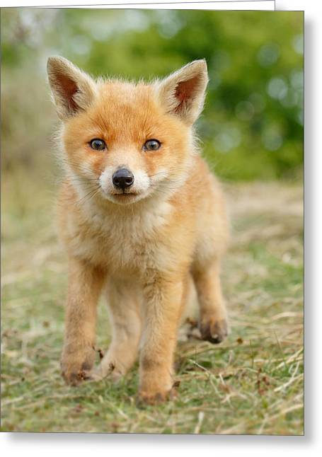 Suckling Greeting Cards - Moi...? _Fox cub Greeting Card by Roeselien Raimond