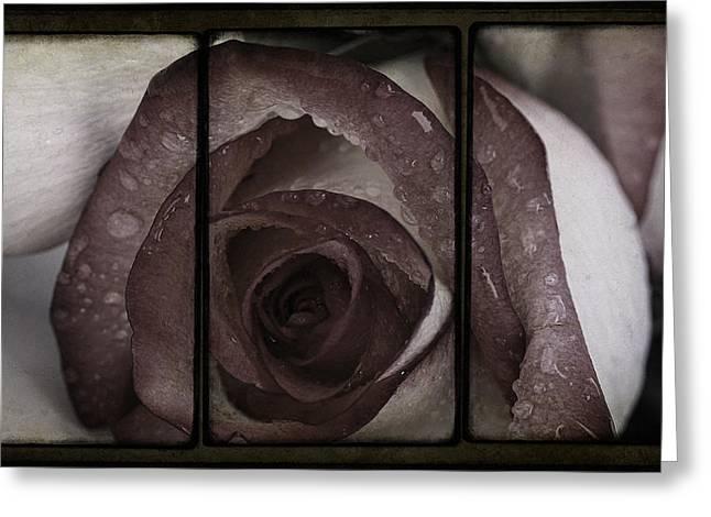Moist Kiss Of A Rose Greeting Card by Georgiana Romanovna