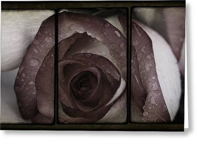 Moist Greeting Cards - Moist Kiss Of A Rose Greeting Card by Georgiana Romanovna