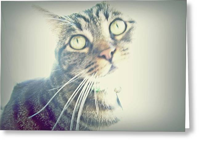 Shelter Kitty Greeting Cards - Mollie Greeting Card by Patricia Strand