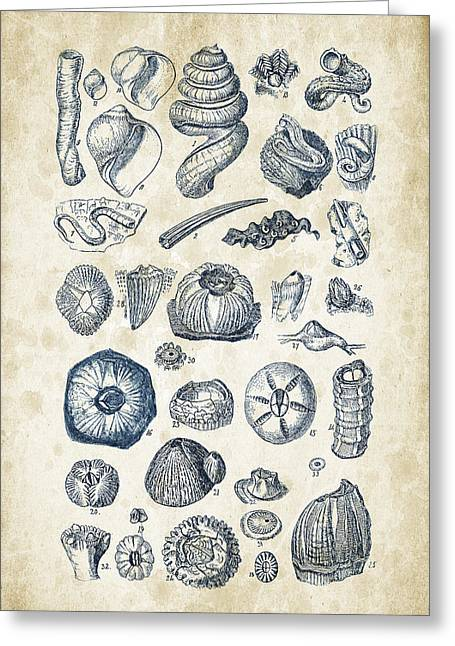 Seashell Digital Greeting Cards - Mollusks - 1842 - 01 Greeting Card by Aged Pixel