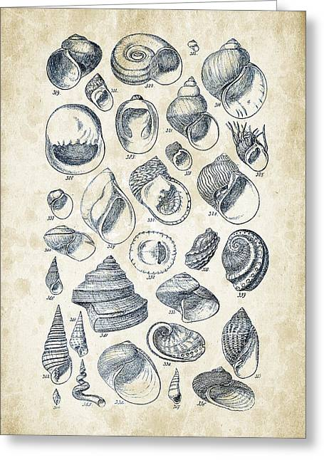 Invertebrate Greeting Cards - Mollusks - 1842 - 15 Greeting Card by Aged Pixel