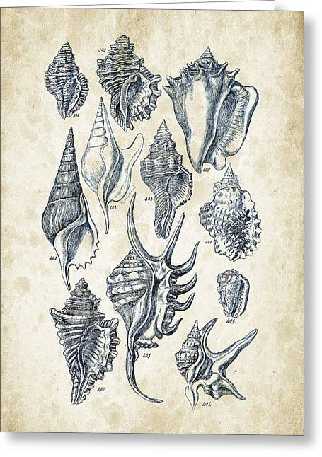 Invertebrates Digital Art Greeting Cards - Mollusks - 1842 - 18 Greeting Card by Aged Pixel